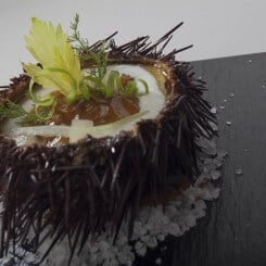 SEA URCHINS IN ACIDULATED AND AROMATIC HOLLANDAISE SAUCE OVER YOGURT