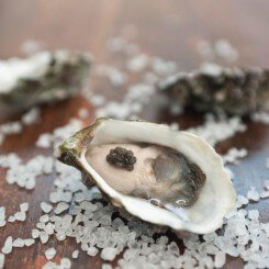 oysternew